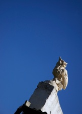 Owl far