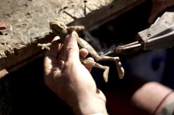 Wax frog
