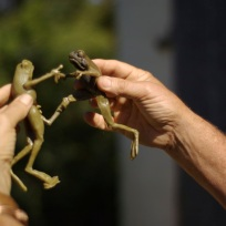 Frog puppet show3