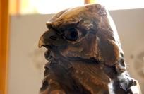 Hawk opposite